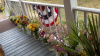 SIDE PORCH BUNTING